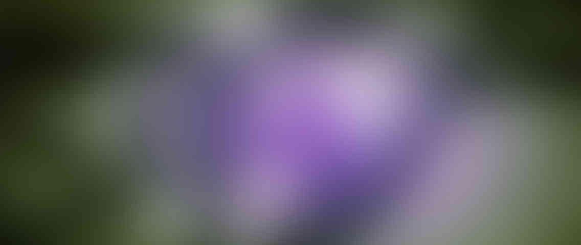 https://www.serviziosegreteria.com/wordpress/wp-content/uploads/2013/03/standout_slide_3_v01-1136x480.jpg
